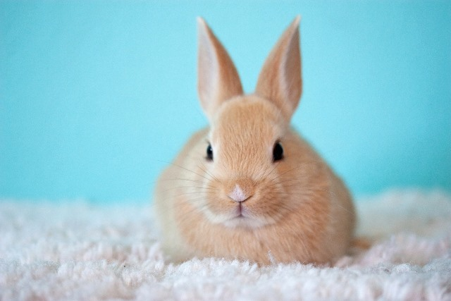 Top tips for rabbit care - Protexin Vet