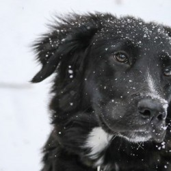 Looking after your dog in winter