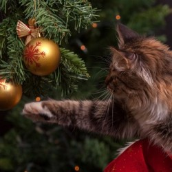 Keeping Your Pets Safe And Happy This Festive Period
