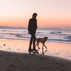 What could a 'No Deal' Brexit mean for Travelling to the European Union with Your Pet?