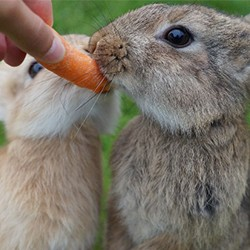 Nutritional needs for rabbits