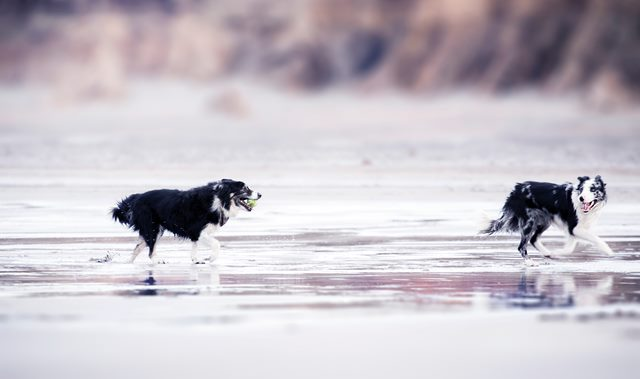 dogs on a beach