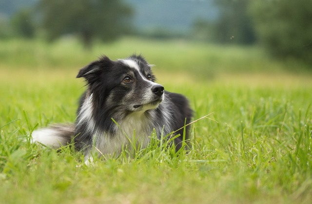 dog outside in grass