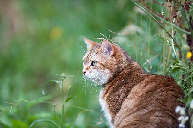 cat sat in grass next to flowers