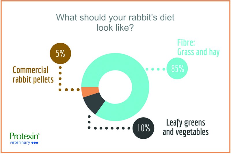 what should your rabbit's diet look like?