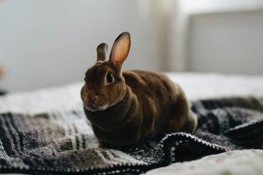 rabbit looking at camera