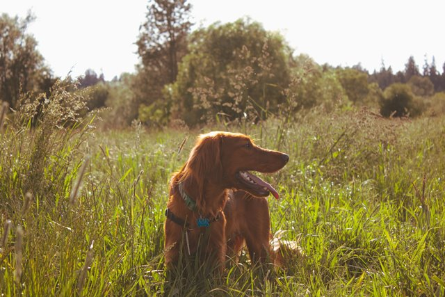 Keeping your Dog Cool and Comfortable this Summer - Protexin Vet